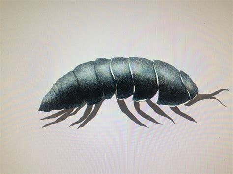 Bug Bytes : Roly Poly… on Behance