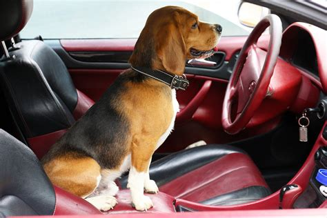 How to keep pets safe in cars