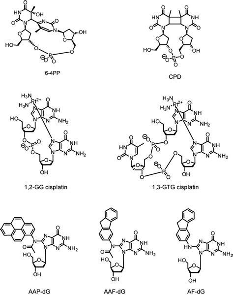 Examples of DNA adducts repaired by NER