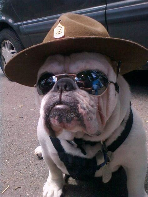 85 best Bulldogs & Marine Corps Bulldogs images on