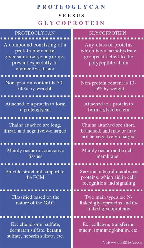 Difference Between Proteoglycan and Glycoprotein - Pediaa