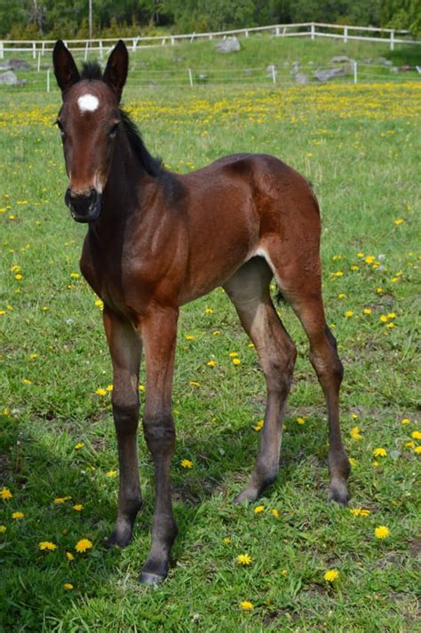 Sisyfos Breeders - 864 Photos - 10 Reviews - Livery Stable